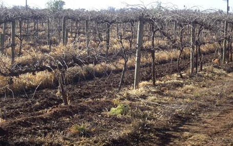 Australia's wine regions threatened by drought.