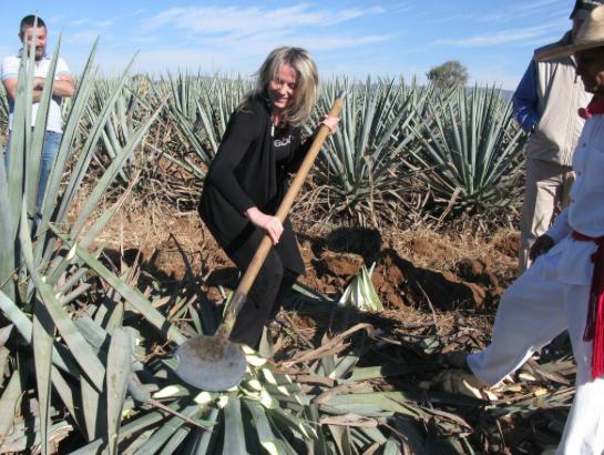Georgia harvesting Agave at Casa Herradura.