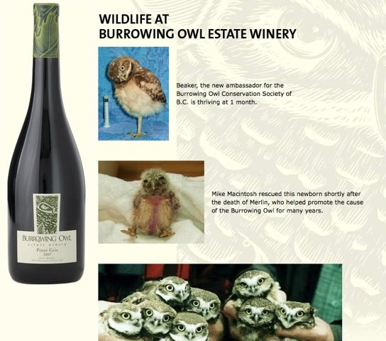 Burrowing Owl Estate Winery Syrah