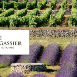 Chateau Gassier Lavender fields of Provence.