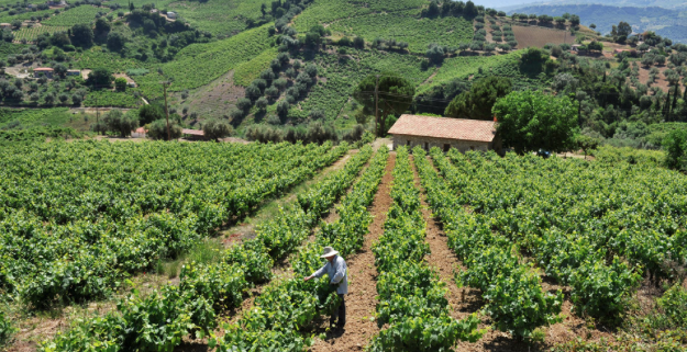 Thymiopoulos Vineyards