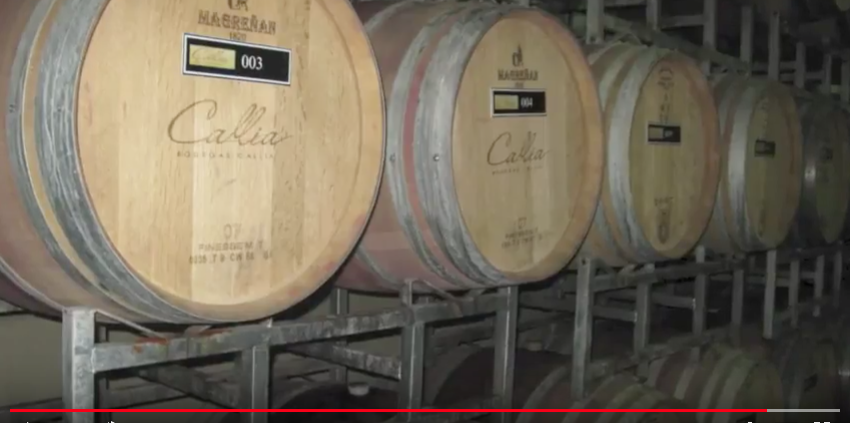 Bodegas Callia Bonarda Wine tasting The Wine Ladies TV March 2013