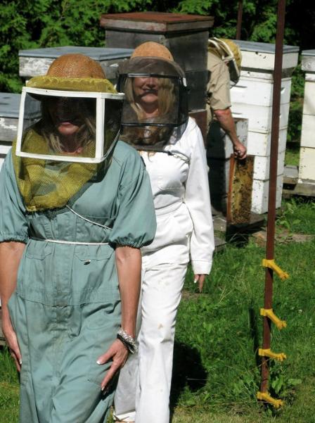 Muskoka apiary