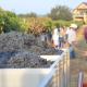 American Viticultural Area, Texas